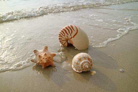 Natural seashells with sea foam on the sunshine beach of Thailand