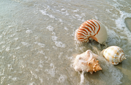Natural Seashells on the sand beach crashing by the wave, Thailand