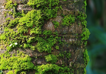 mosses: Coconut Tree Trunk with Vibrant Green Mosses, for Background and Plant Texture with Selective Focus