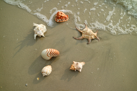 Many types of beautiful natural seashells scattered on the beach, Thailand Stock Photo