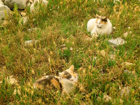 Two Calico Cat Napping on the Field of Ancient Ruins of Acropolis, Athens, Greece