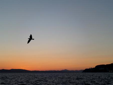 Vogel die tegen de hemel van de middernachtzonsondergang over de Noordzee, Bergen, Hordaland, Noorwegen vliegen