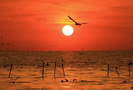 Silhouette of Flying Seagull against Vivid Color Sunrise Sky, Gulf of Thailand Stock Photo