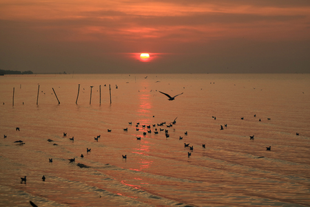 Scenic Sunrise over the Calm Sea of Gulf of Thailand with Numerous Floating Seagulls
