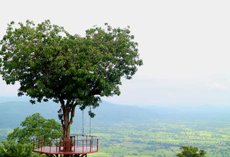 Art of the Nature, Natural Heart Shape Tree in Phitsanulok Province of Thailand Foto de archivo