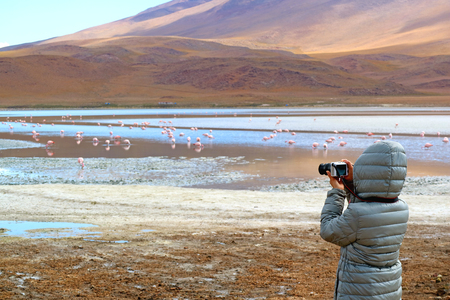 Female Tourist Taking Pictures of a Big Group of Pink Flamingo at Laguna Hedionda, The Saline Lake in Andean Altiplano, Potosi, Bolivia