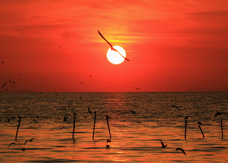 Impressive View of Shiny Rising Sun with the Silhouette of a Flying Seagull on Gulf of Thailand