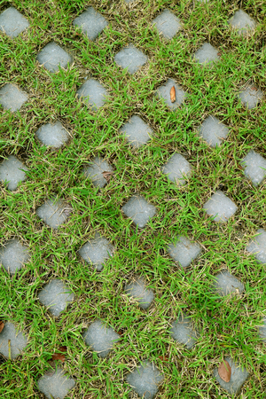 Vertical image of turf stone pavers covered with green grass for background or banner
