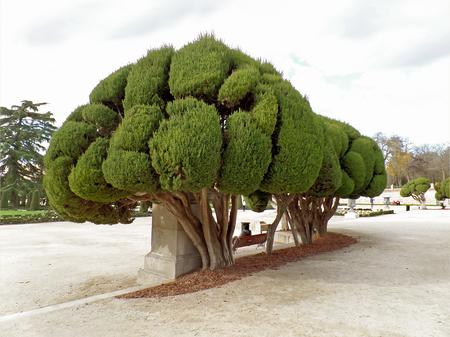 Impressive Trees in Parque del Buen Retiro or Park of the Pleasant Retreat in Madrid of Spain Imagens