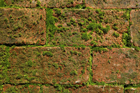 Outer Wall with green mossy plants growing between terracotta bricks