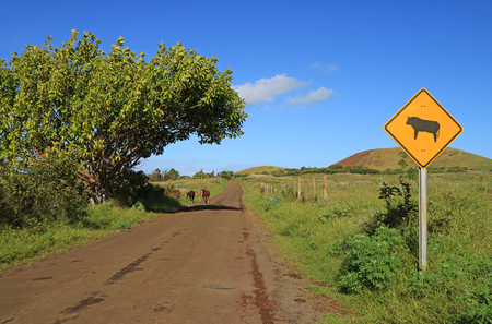 Warning signpost of cow on the roadside with a small group of wild horses in the backdrop, Easter Island, Chile, South America 스톡 콘텐츠