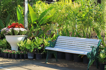 White wooden bench in the tropical garden Stock Photo