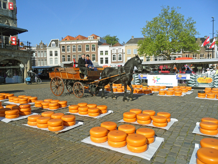 Wheels of Gouda Cheese Delivered by Horse drawn Cart to the Traditional Gouda Cheese Market, The Netherlands Editöryel