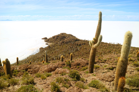 The Rocky Outcrop Isla Incahuasi or Isla del Pescado, full of Trichocereus Cactus Located in the Middle of Uyuni Salt Flats, Potosi, Bolivia, South America