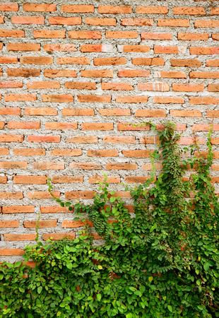 Vertical Image of an Aging Building Cement Brick Wall with Growing Green Plants Imagens