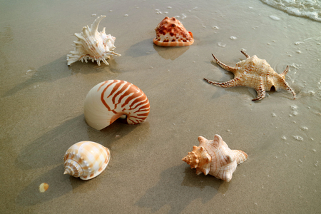 Various types of beautiful natural seashells on the wet sand beach Stock Photo