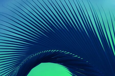 Abstract Pop Art Surreal Style Deep Blue Palm Tree Leaf on Mint Green Background