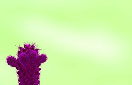 Mini cactus in surreal styled vivid magenta isolated on lime green background with free space for text and design