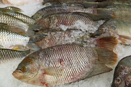 Heap of Fresh Tilapia Fishes on Ice at the Market