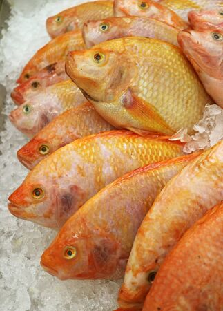 Vertical Image of Row of Fresh Raw Thai Ruby Fishes on Ice at the Market