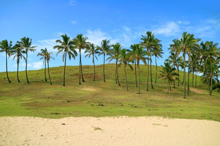 Row of Coconut Palm Trees on the Anakena Beach, Easter Island, Chile, South America