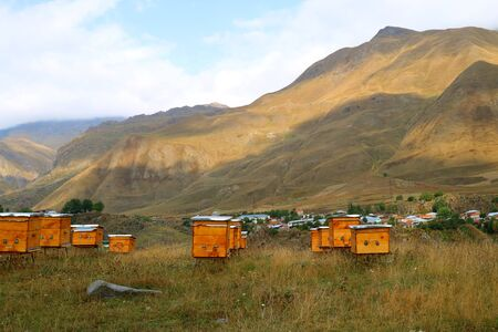 Small apiary at the rural foothills of Georgia Country Stok Fotoğraf