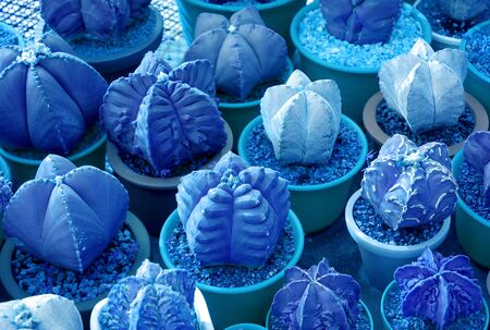 Surreal pop art style of potted mini succulent plants in vibrant blue color