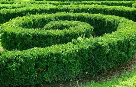 Ornamental Spiral Shape Trimmed Shrubs in the Garden