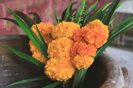 Bouquet of Marigold Flowers for Offering in Buddhist Temple in Thailand Foto de archivo