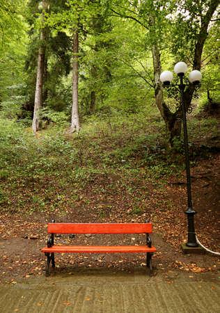 Red wooden empty bench in the rainy park