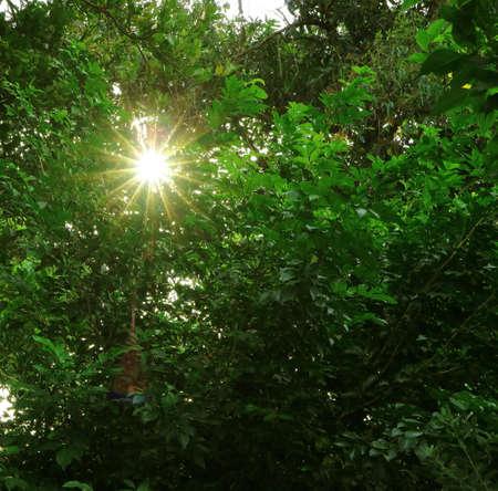 Dazzling sunlight shining through vibrant green foliage