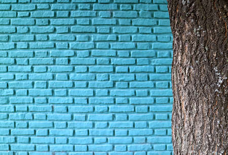 Closeup rough tree trunk with blurry turquoise blue colored old brick wall in the backdrop
