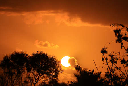 Incredible vibrant sunset over the silhouette of tropical trees