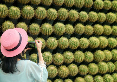 Woman in Hat Taking Pictures of Amazing Numerous Rows of Potted Golden Barrel Cactus Plants