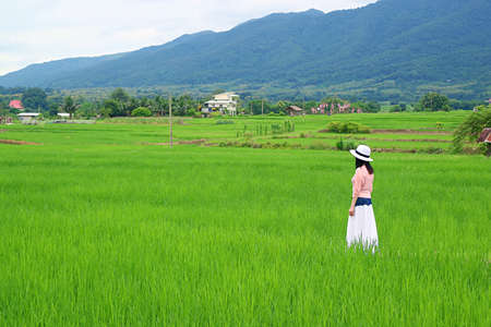Woman in white hat taking a walk in the vivid green paddy fields