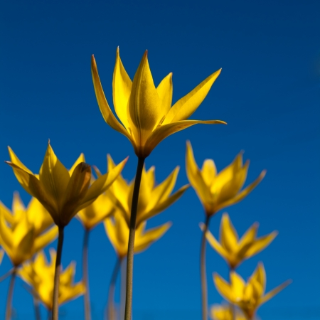 yellow flowers with blue sky Stock Photo
