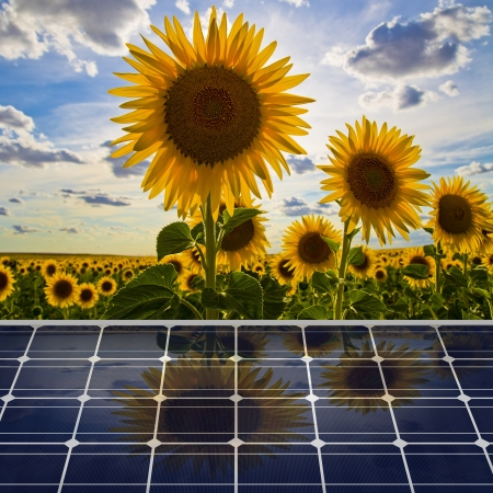 Sunflower field and solar panel Stock Photo - 14392132