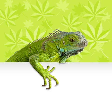 green iguana peeking with leaves in background Stock Photo