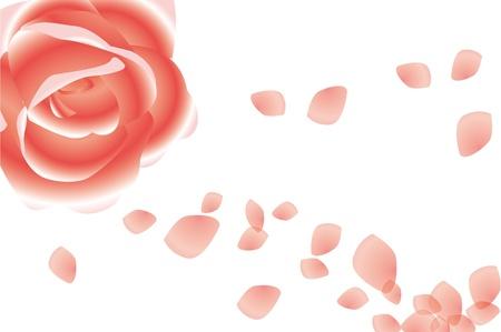 rose Stock Vector - 15754448