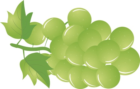 Иллюстрация зеленого винограда, изолированных на белом фоне