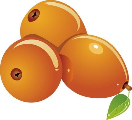 three loquats