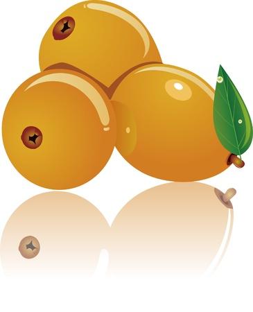 illustration of three loquat