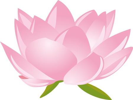 lirio acuatico: loto