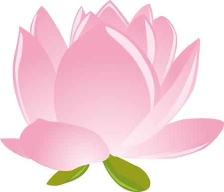 illustration of sigle pink lotus(waterlily) Stock Vector - 15811667