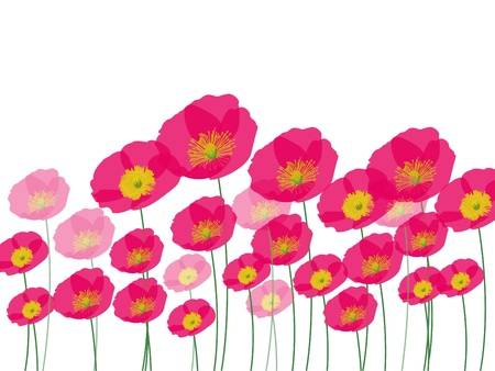 Row of poppy flowers Vector