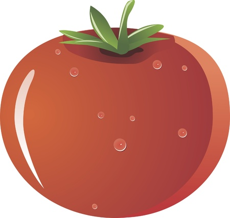 fresh tomato isolated on white background Stock Vector - 15814082