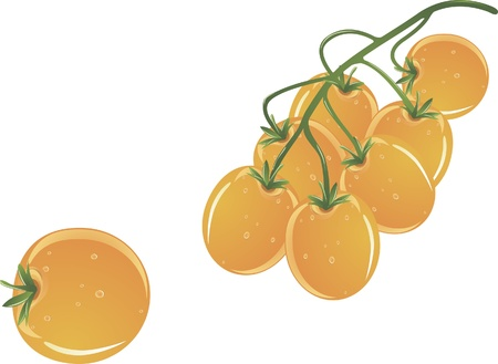 Yellow cherry Illustration