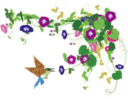 Утренняя слава и птиц