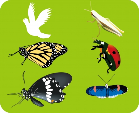 Ladybug, grasshopper,butterfly icon set Stock Vector - 16345691