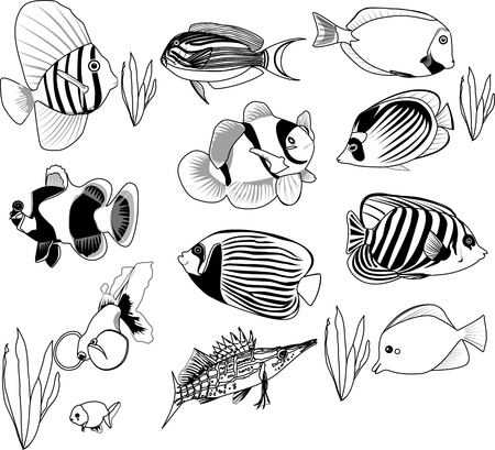 clown fish: fish set  Illustration